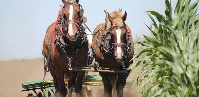 Znate li kako je nastala mjera – konjska snaga (KS)?